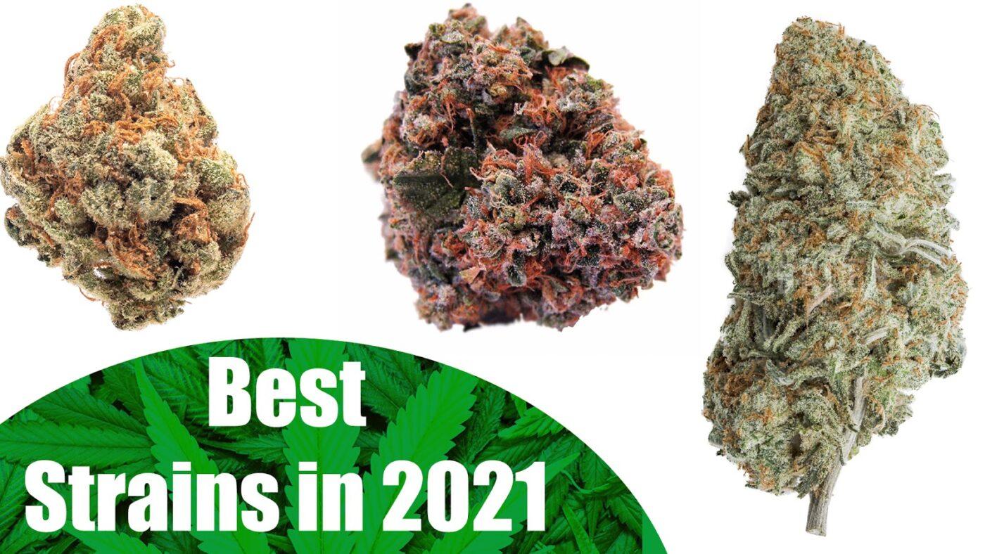 Best Strains 2021
